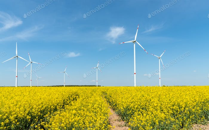 Blooming rapeseed field with wind turbines in the back