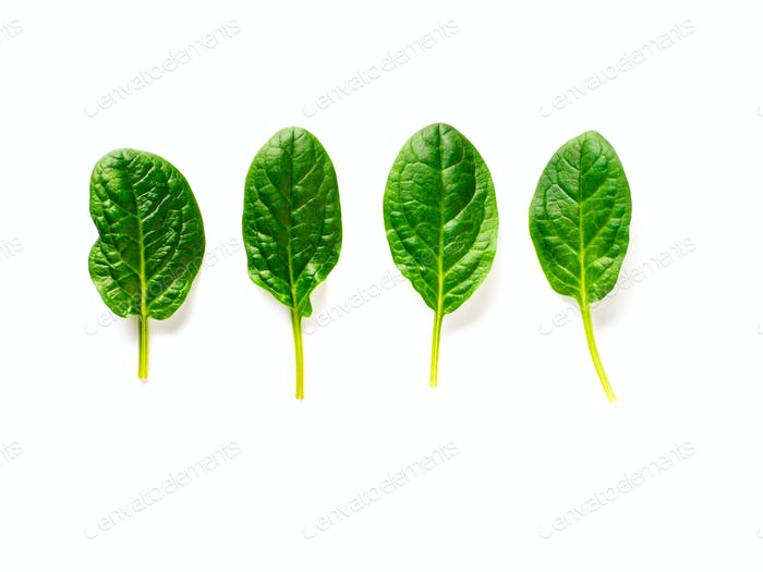 Four baby spinach leaves isolated on white