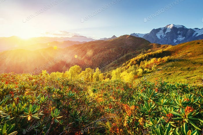 Autumn landscape and snow-capped mountain peaks. Carpathians. Ukraine. Europe