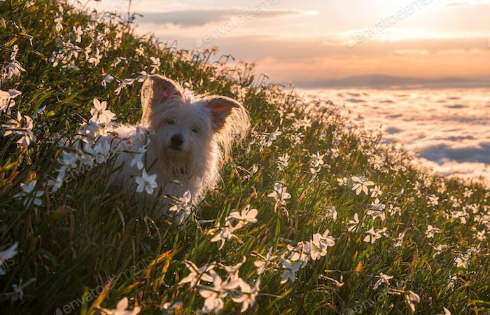 White dog on the meadow