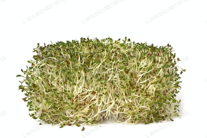 Bio Alphalpha Sprout