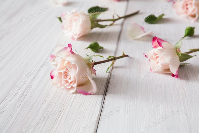Floral pattern made of pink roses on white rustic wood, closeup