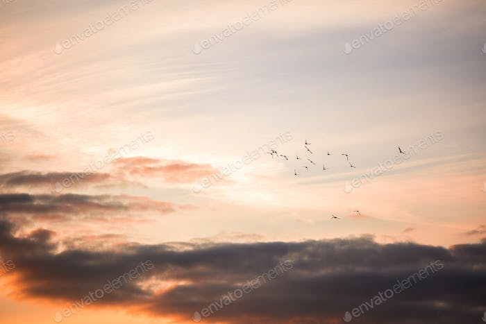 Flying pigeons at sunset