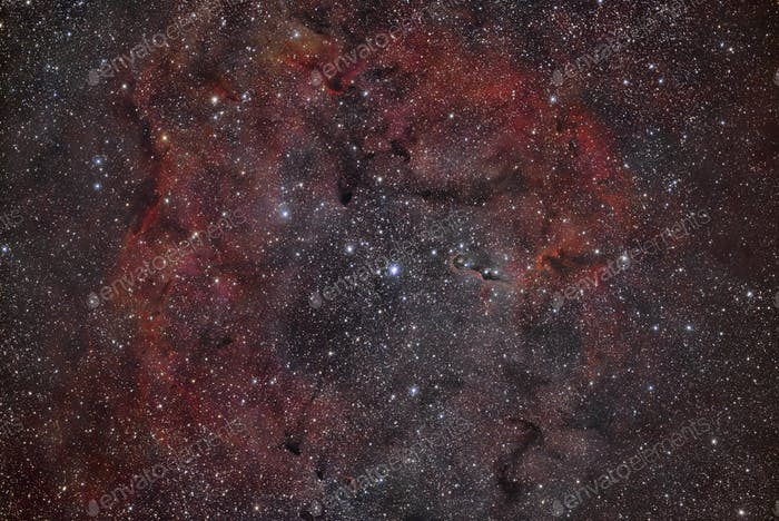 VdB 142 Elephant's Trunk Nebula