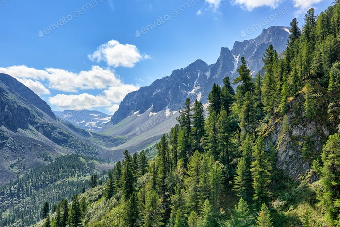 Dark Coniferous Taiga on Mountainside in July