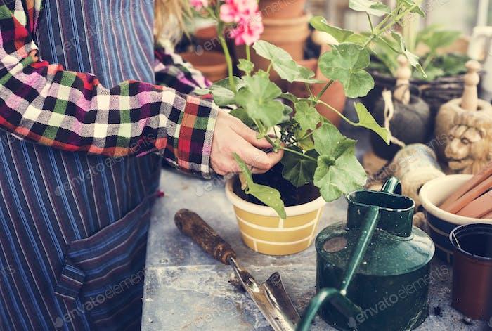 Cultivate Garden Nature Saisonales Wachstumskonzept
