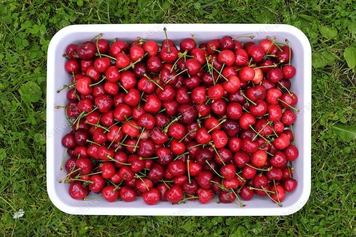 Cherry merry berry closep