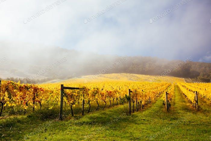 Yarra Valley Vineyard and Landscape in Australia