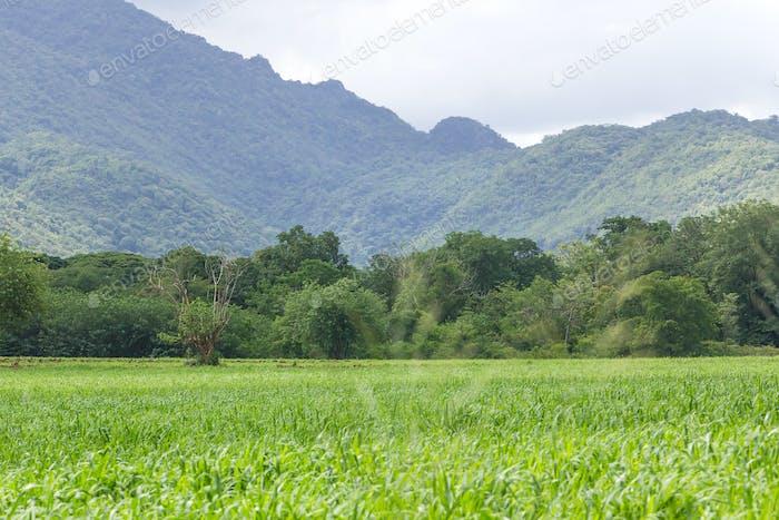 Green grass field-9
