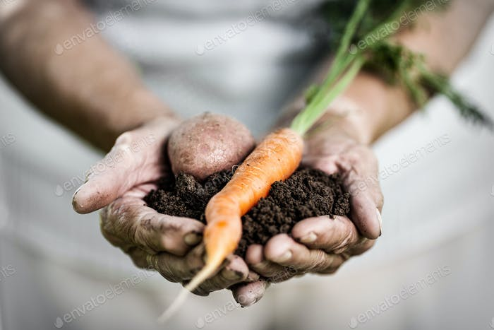 Elderly woman holding fresh crop in her hands