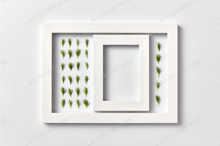 Plant picture of pine twigs needles and empty frame on a light background