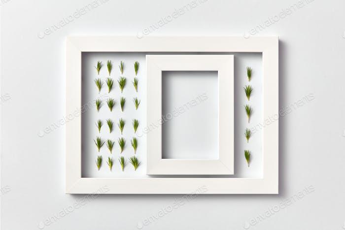 Pflanzenbild von Tannenzweigen Nadeln und leeren Rahmen auf hellem Hintergrund
