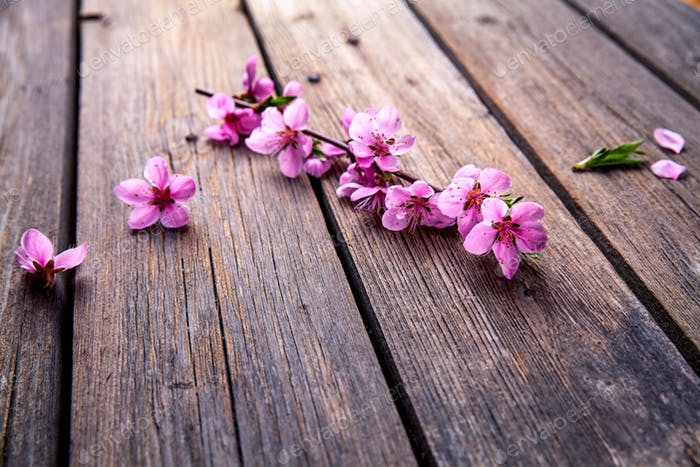 Peach blossom on old wooden background. Fruit flowers