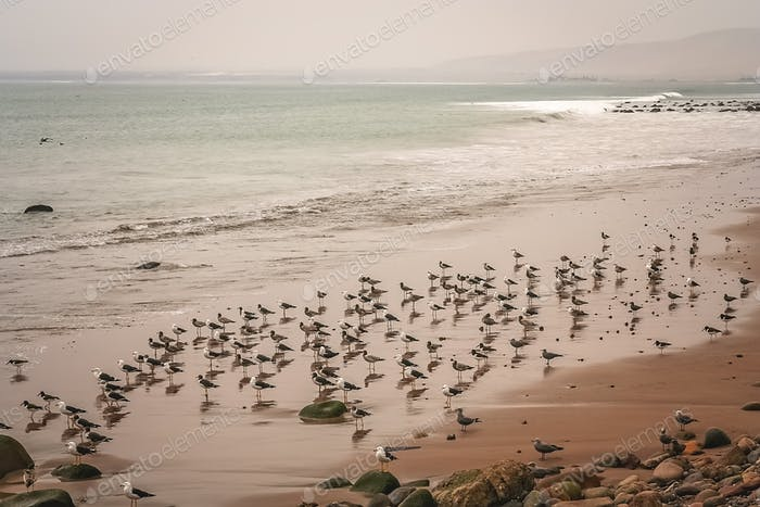 Seabirds on the beach in Arica
