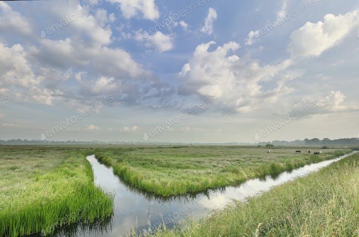 pastos verdes, hermoso cielo y río