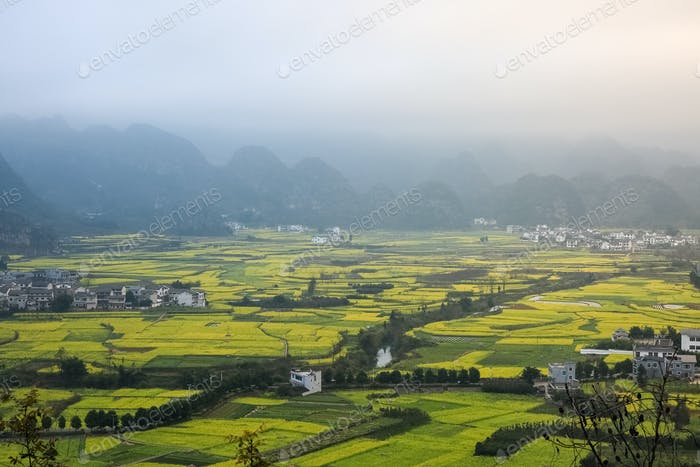 yunnan landscape of rapeseed flowers field