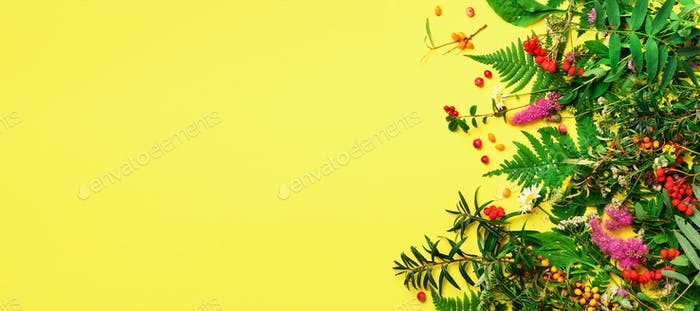 Ingredients of herbal alternative medicine, holistic and naturopathy approach on yellow background