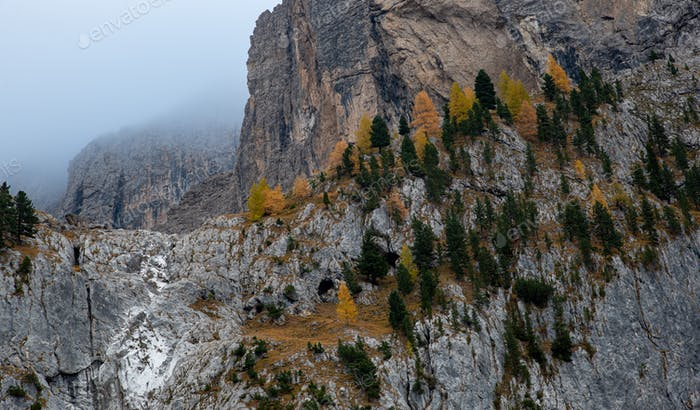 Yellow larches on the edge of the rocky mountain. Dolomite mountains Italy, Europe