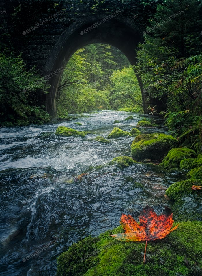 Old stone bridge and flowing river with colorful leaf in foreground