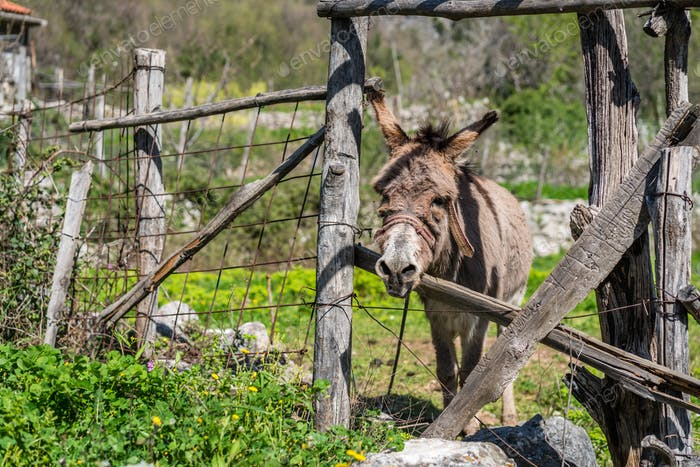 Small sad donkey on a farm