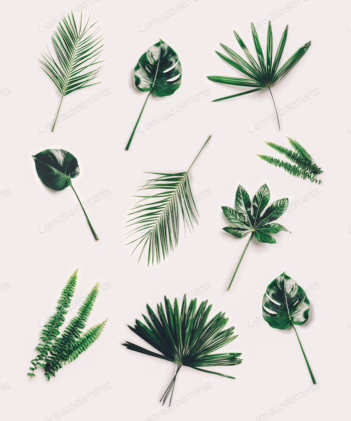 Set of different tropical leaves on white background.