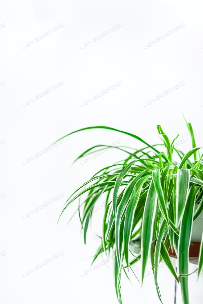 Green plants home decoration on white background