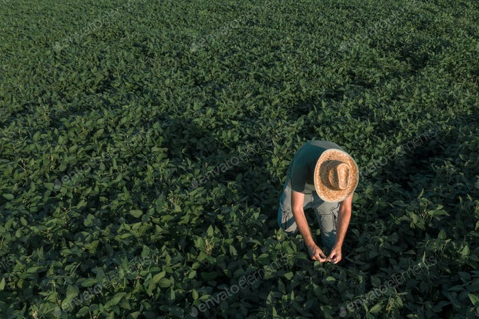 Aerial view of soybean farmer working in the field from drone pov