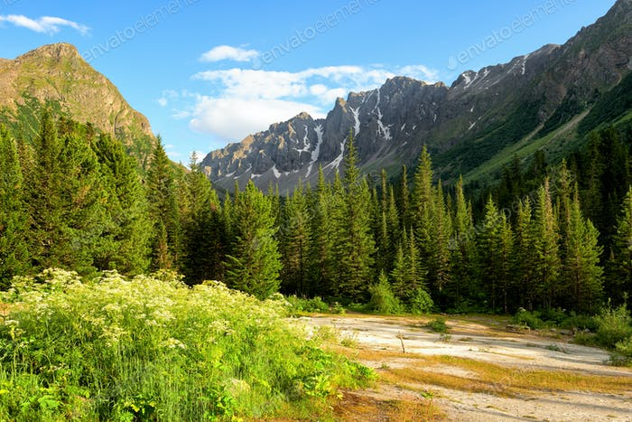 Travertine Glade near Dark Coniferous Taiga