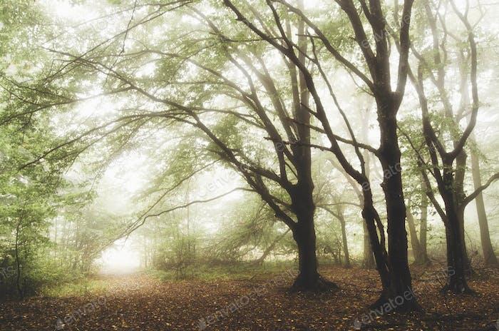 Зеленый фэнтези лес с таинственным туманом
