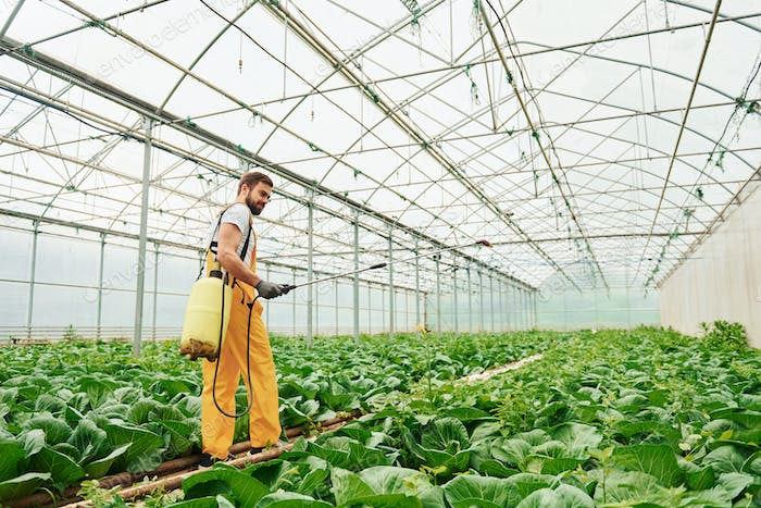Young worker in yellow uniform watering plants by using special equipment inside of hothouse