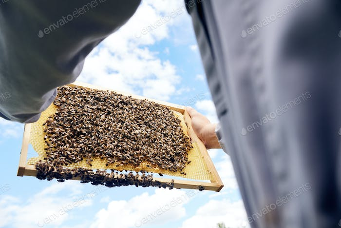 Apiarist Holding Bees