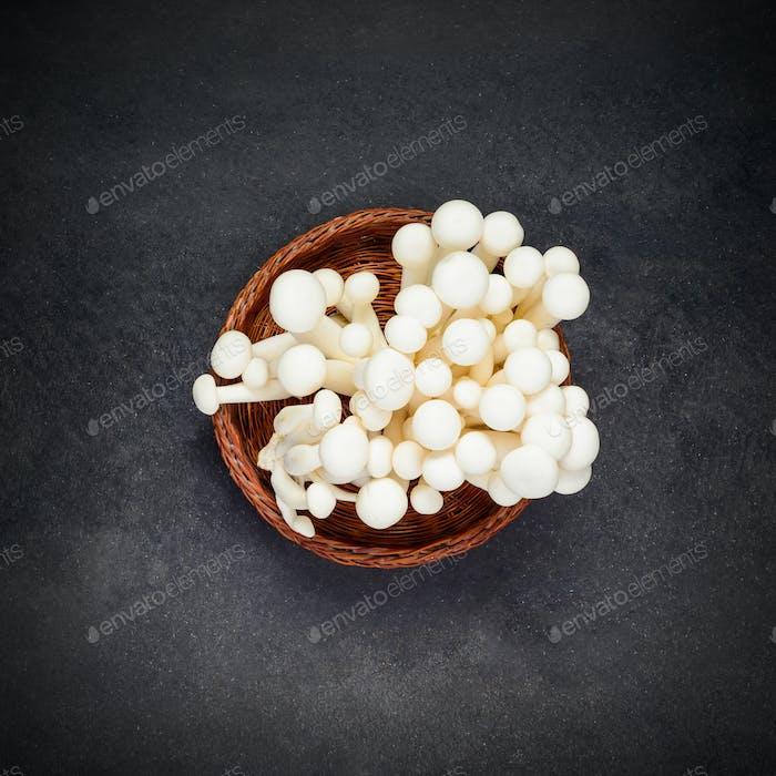 Shimeji Edible Mushroom
