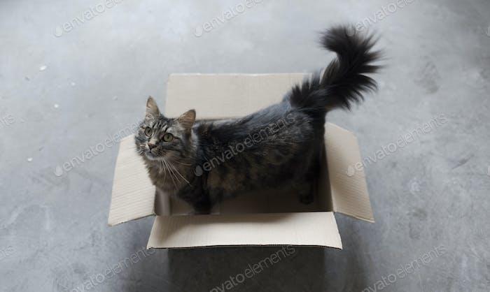 Cute cat playing in a carton box