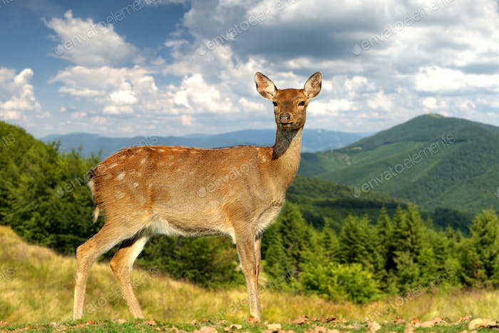 Deer on mountain background