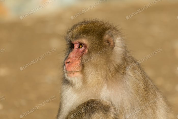 Monkey in wildlife