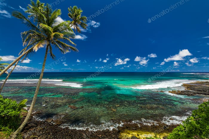 Tropical volcanic beach on Samoa Island with many palm trees