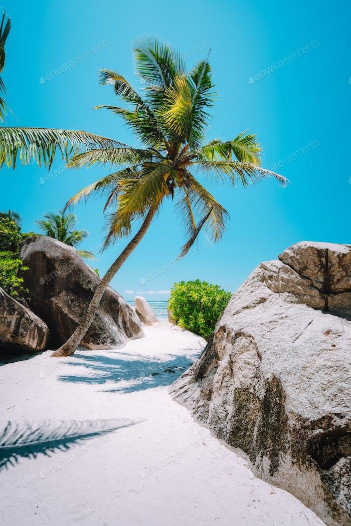 Palmen auf Anse Source d'Argent, La Digue Insel, Seychellen. Urlaub exotisch