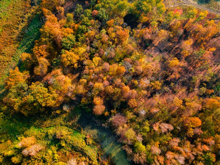 Autumn forest at sunrise. Drone photo