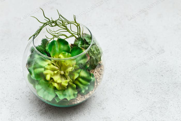 Mini succulent garden concept, top view, copy space