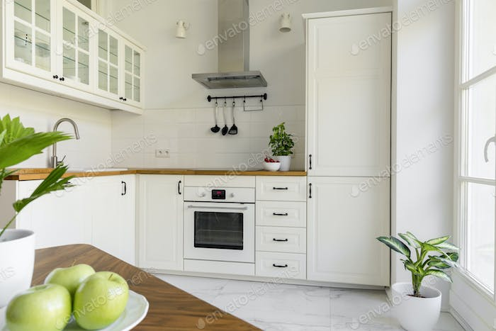 Plant in white minimal kitchen interior with silver cooker hood
