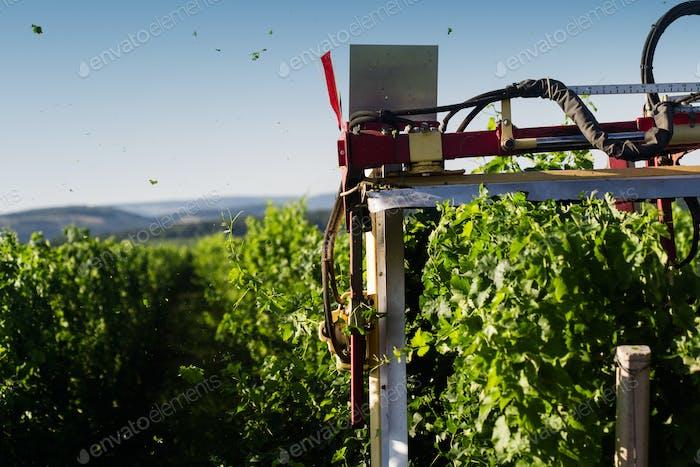 Traktor, der den Weinberg am Morgen trimmen