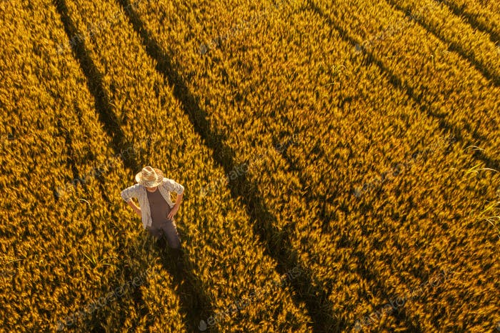 Aerial view of farmer standing in golden ripe wheat field