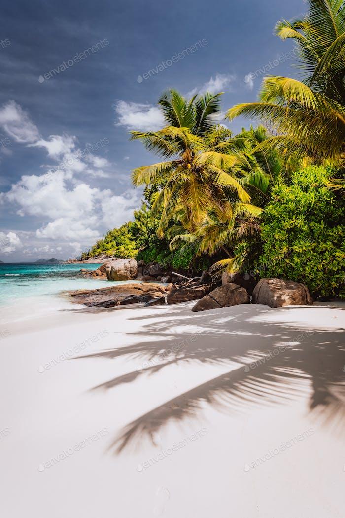 Beautiful Petite Anse beach at Mahe Island, Seychelles. Palm trees and blue sky. Holiday vacation
