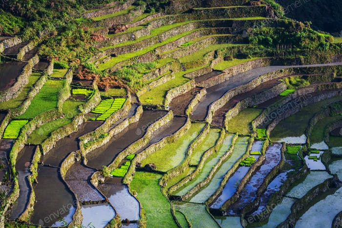 Thumbnail for Rice terraces