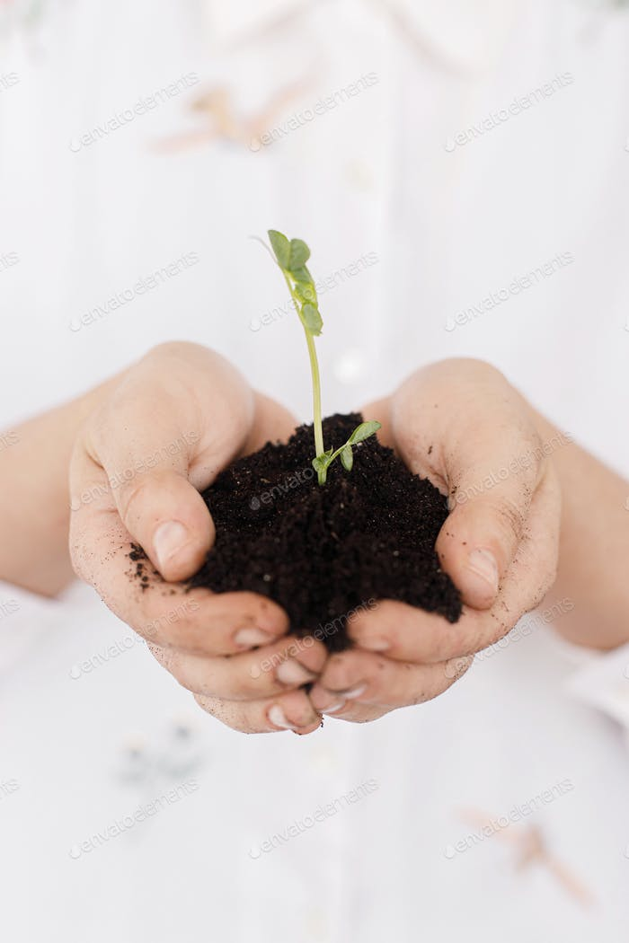 Hands holding green fresh sprout with ground. Earth day concept. Save planet. Gardening