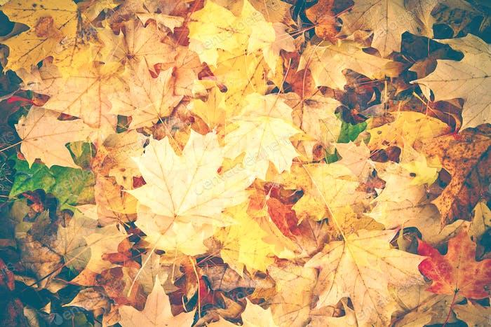 Colorful Fall Foliage Background