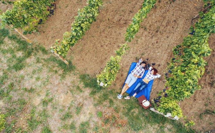 Picnic At Vineyard