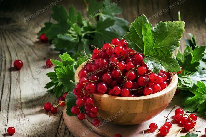 Trauben von roten Johannisbeere mit Blättern