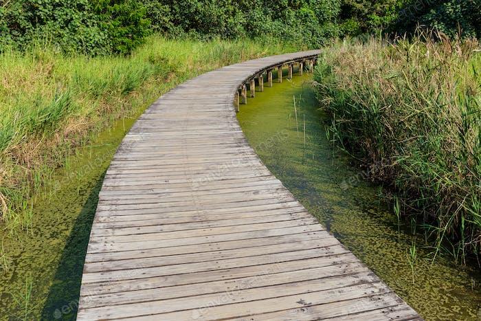 Hong Kong Wetland Park wooden walk way