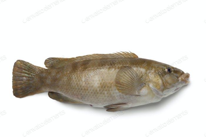 Fresh brown wrasse fish
